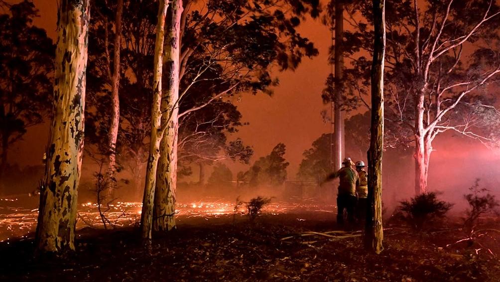 Murieron más de 480 millones de animales por los incendios en Australia