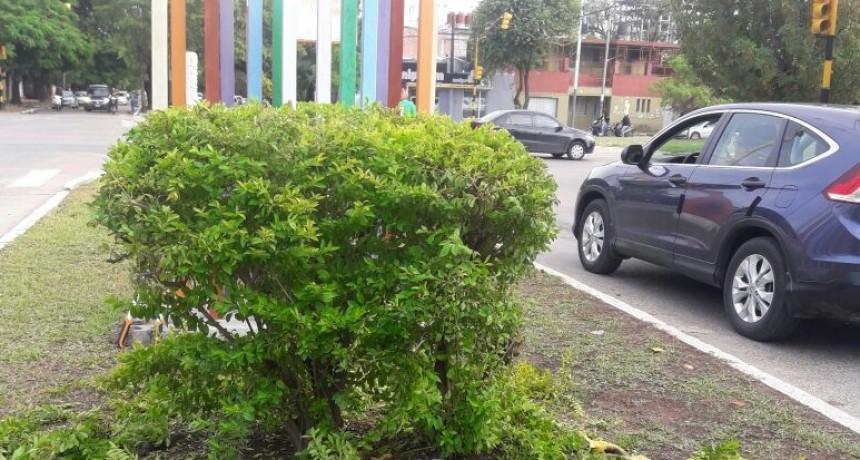 El municipio realiza trabajos de embellecimiento urbano en la intersección de Vélez Sarsfield y Paraguay