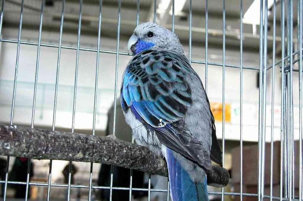 Desbaratan un criadero ilegal y rescatan a 300 aves de especies exóticas