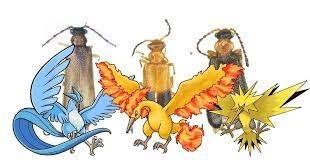 Le pusieron el nombre de tres pokémones legendarios a unos exóticos bichos recién descubiertos