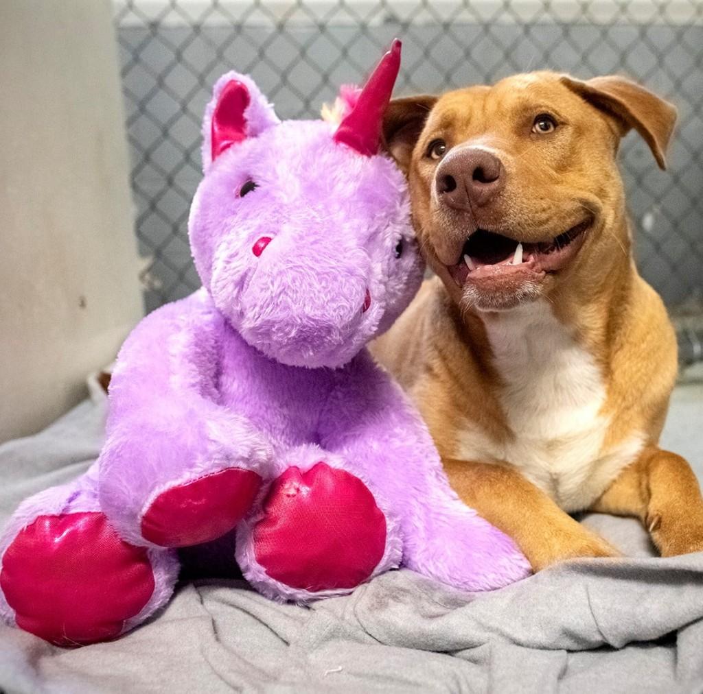 Un perro robó cinco veces un unicornio hasta que se lo terminaron comprando