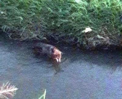 Bomberos rescatan a un perro que había caído a un canal