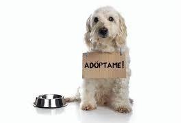 Jornada de adopción responsable de mascotas