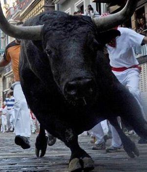 Indignación por video de toro agonizando en la calle