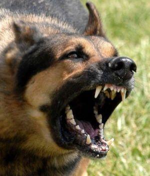 Habilitan dependencias comunales para colocar microchips a perros peligrosos
