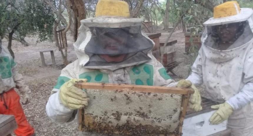 Chaco: El Gobierno provincial apunta a la certificación de procesos productivos apícolas para una provincia sostenible