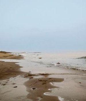 Terror por extraña criatura que apareció en una playa australiana