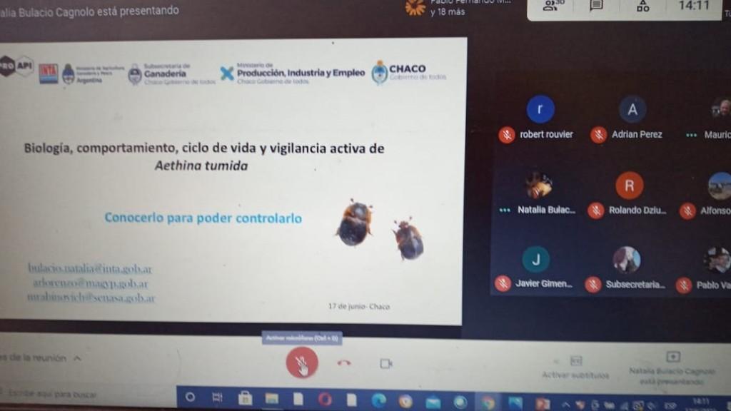 Producción apícola segura: Chaco contará con una red de monitoreo de plagas