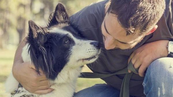 Los perros comprenden lo que los humanos les dicen