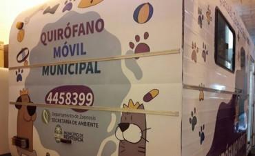 El quirófano veterinario móvil en el Barrio Toba