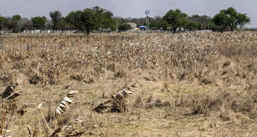 Proponen declarar la emergencia económica, argropecuaria y ganadera