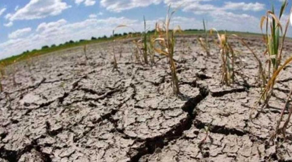 Sequía: más de 300 mil hectáreas cultivadas con distintos grados de daños en el Chaco