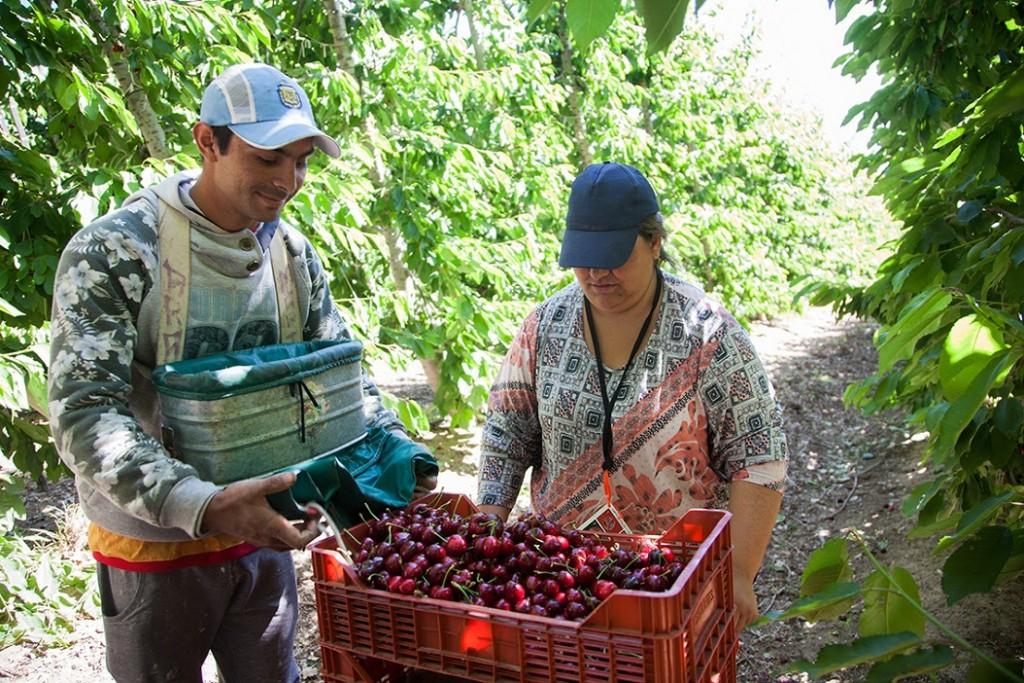 El RENATRE destaca la importancia del DNU que compatibiliza los planes sociales con el empleo rural registrado