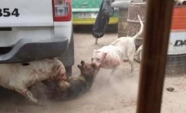 Un hombre utilizaba perros callejeros para dar de comer a sus dogos
