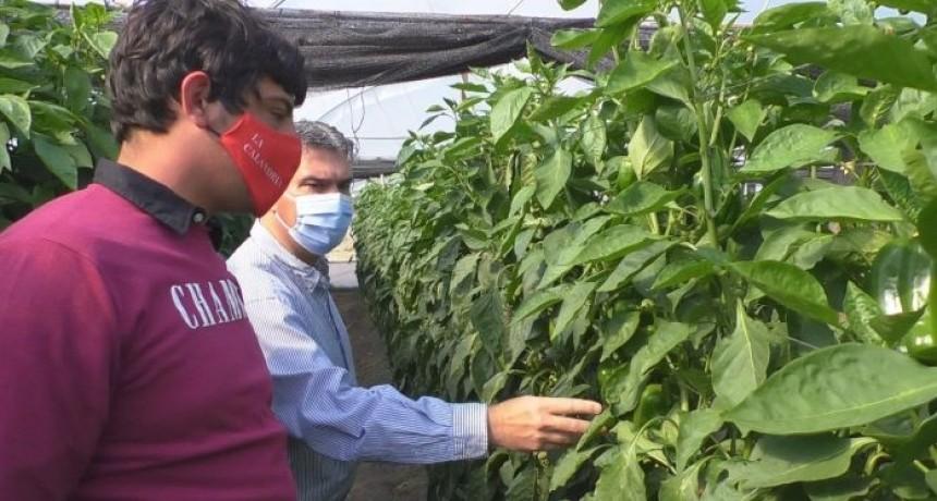 Chaco: El Gobierno entregó módulos de cobertura para invernaderos a productores hortícolas