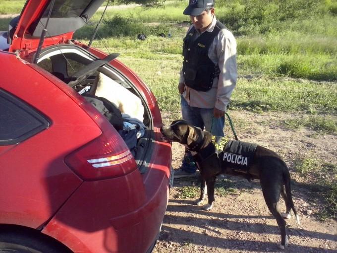 CAMINERA SECUESTRO 77 RODADOS Y ESTUPEFACIENTES ILEGALES EN OPERATIVO CONJUNTO CON DROGAS PELIGROSAS