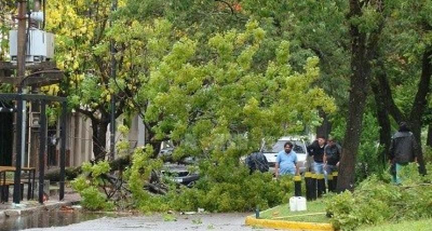 La tormenta trajo cortes de energía eléctrica y caída de árboles en Chaco